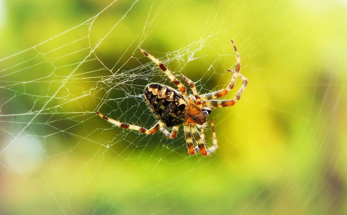 Pourquoi il ne faut pas tuer les araignées de maison